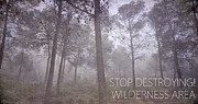 Trees Framed Prints - Stop Destroying Forest Wilderness Area Framed Print by Guido Montanes Castillo