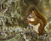 Gerald Murray Photography - Stop Looking at my Nuts