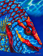 Tropical Art Tapestries - Textiles Prints - Stoplight Parrotfish Print by Daniel Jean-Baptiste