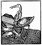Stork Drawings Prints - Stork Wood Engraving Print by