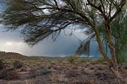 Tam Ryan - Storm Approaching