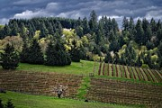Pinot Noir Photos - Storm coming to Murto by CJ Lesieutre