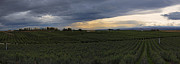 Yakima Valley Photo Prints - Storm over the Yakima Valley Print by Mike  Dawson