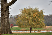 Willow Lake Posters - Storm-Tossed Willow Tree Poster by Deborah Smolinske