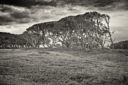 Chris Brehmer Photography - Storm Trees