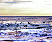 Outer Banks Metal Prints - Stormy Flight Metal Print by Kim Bemis