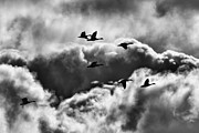 Fox Valley Photos - Stormy Flight by Thomas Young