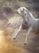 Horse Images Digital Art Prints - Stormy Print by Melinda Hughes-Berland