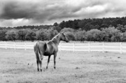 Photographer Lightning Photo Prints - Stormy Pasture Print by Scott Hansen