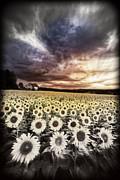 Debra and Dave Vanderlaan - Stormy Sunrise Art