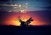 Sunsets Prints - Stormy Sunset Tree Silhouette Print by JaqStone