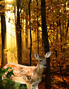 Randall Branham Prints - Storybook Bambi Photo Print by Randall Branham