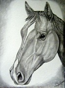 Western Pencil Drawing Prints - Stout Print by Tanya Arends