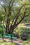 Kate Brown Framed Prints - Stow Lake Bench Framed Print by Kate Brown