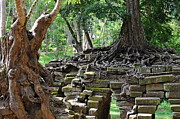 Sami Sarkis Posters - Strangler fig tree roots on Preah Khan Temple Poster by Sami Sarkis