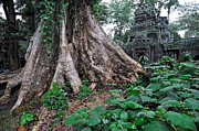 Sami Sarkis Posters - Strangler fig tree roots on the ancient Preah Khan Temple Poster by Sami Sarkis