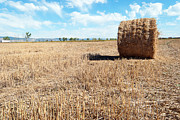 Backgrounds Pyrography Prints - Straw Bales at a Stubbel Field Print by Svetoslav Radkov
