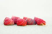Golden Mean Posters - Strawberry cones Poster by Cynthia Holling-Morris