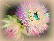 Strawflower Awakening Print by Shirley Sirois