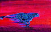 Cheetah Digital Art Metal Prints - Streaking Cheetah Metal Print by Nick Gustafson