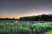 Nature Center Pond Prints - Streaky Swamp Sunrise Print by Deborah Smolinske