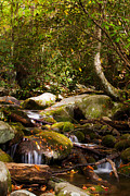 Gatlinburg Tennessee Prints - Stream at Roaring Fork Print by Lena Auxier