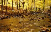 Featured Posters - Stream In Autumn Poster by Chris Coe