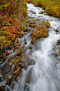 Stream In Autumn Print by Utah Images