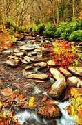 Smokey Mountains Framed Prints - Stream into Fall - Great Smokey Mountains Framed Print by Dan Carmichael