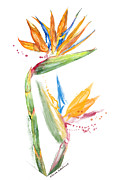 Strelitzia Painting Framed Prints - Strelitzia - Bird Of Paradise 13 Framed Print by Elena Yakubovich