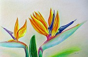 Floral Photos Drawings Prints - Strelitzia Print by Zulfiya Stromberg