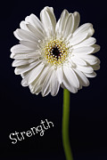 Healing Posters Photos - Strength by Kim Andelkovic