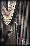 Franklin Tennessee Prints - Strings of the Harp Print by Pic
