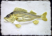 Largemouth Bass Reliefs - Striped Bass by Darrell Ross