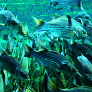 Under The Ocean Prints - Striped Bass - Painterly v1 - Square Print by Wingsdomain Art and Photography