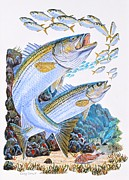 Fish Underwater Paintings - Striped Bass rocks by Carey Chen