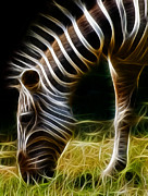 Zebra Photo Posters - Striped Fractal Poster by Ricky Barnard