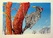 Striped Mixed Media Prints - Striped Woodpecker Print by Javier Molina
