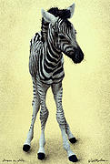 Zebras Framed Prints - Stripes On Stilts... Framed Print by Will Bullas