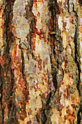 Stripped Paintings - Stripped bark painting by Magomed Magomedagaev