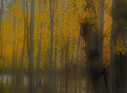 Tom Kelly - Strolling in the Aspens