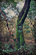 Tree Trunks Metal Prints - Strong Enough to Hold You Metal Print by Laurie Search