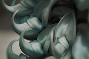 Lei Photos - Strongylodon macrobotrys - emerald vine - Blue Jade Vine by Sharon Mau