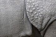 One Horned Rhino Photo Prints - Structure of the skin of an Indian rhinoceros in a zoo in the Netherlands Print by Ronald Jansen