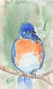 Bev Veals - Study of a Bluebird