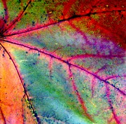 Autumn Decorations Posters - Study of a Leaf Poster by Rhonda Barrett