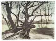Impressionism Drawings Prints - Study of a Tree Print by Vincent van Gogh