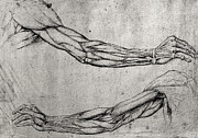 Hands Drawings Prints - Study of Arms Print by Leonardo Da Vinci