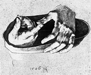 Albrecht Drawings Prints - Study of Christs Hands Print by Albrecht Durer