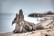 Tree Stump Photos - Stump Dragon by Joan McCool